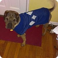 Adopt A Pet :: Peanut - Mira Loma, CA