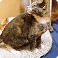 Adopt A Pet :: Tootie - Tampa, FL