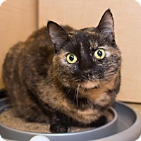 Adopt A Pet :: Twiggy - Sterling Heights, MI