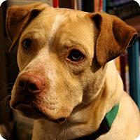 Adopt A Pet :: Gingerale - Alpharetta, GA