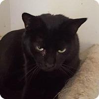 Domestic Shorthair Cat for adoption in New Bedford, Massachusetts - Keeper