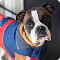 Adopt A Pet :: Brody - Baton Rouge, LA