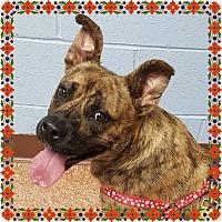 Adopt A Pet :: Clarinda - Snellville, GA
