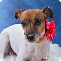 Adopt A Pet :: Jackie - Miami, FL