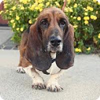 Adopt A Pet :: Buddy - Whittier, CA