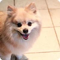 Adopt A Pet :: Gracie - Morganville, NJ