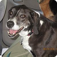 Adopt A Pet :: Sophie & Murray - East Hartland, CT