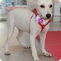 Adopt A Pet :: Flossie Wong - Seattle, WA