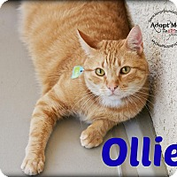 Adopt A Pet :: Ollie - Canyon Country, CA