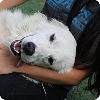 Adopt A Pet :: Sally Albright - Brooklyn, NY