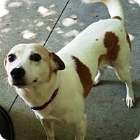Adopt A Pet :: Reese - Kalamazoo, MI
