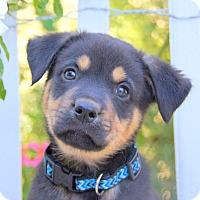 Adopt A Pet :: Brisbane von Portia - Thousand Oaks, CA
