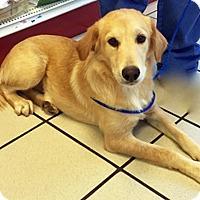Adopt A Pet :: Fairy - BIRMINGHAM, AL