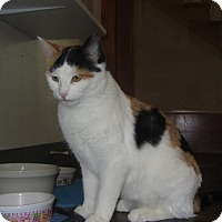 Calico Cat for adoption in Ridgway, Colorado - Emoji