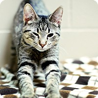 Adopt A Pet :: Beast - Appleton, WI