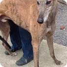 Adopt A Pet :: Deandre Daniels