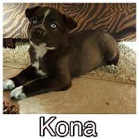 Adopt A Pet :: Kona - New Milford, CT