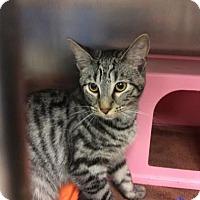Adopt A Pet :: Naomi - Janesville, WI