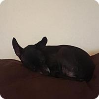 Adopt A Pet :: April - Alva, OK