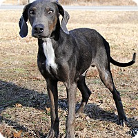 Doberman Pinscher Mix Dog for adoption in Parsons, Kansas - Trooper