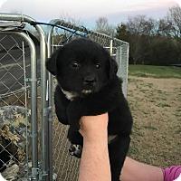 Adopt A Pet :: Connor - Trenton, NJ