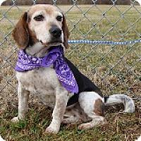 Adopt A Pet :: Leia - Schaumburg, IL