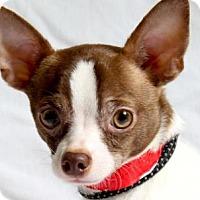 Adopt A Pet :: Mickey - Colorado Springs, CO