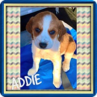 Adopt A Pet :: ADDIE, BANDIT AND SMOKEY - PARSIPPANY, NJ