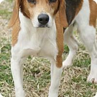 Adopt A Pet :: Daisy - Potomac, MD