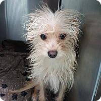 Adopt A Pet :: Tanner - Renton, WA