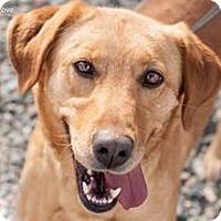 Adopt A Pet :: Cleo - Richmond, VA