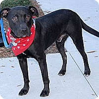 Adopt A Pet :: Scrappy - Charlotte, NC