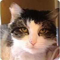 Adopt A Pet :: Furbella - Albany, NY