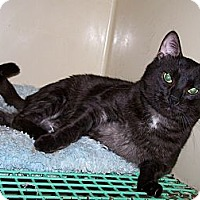 Adopt A Pet :: Panther ADOPTED!! - Antioch, IL