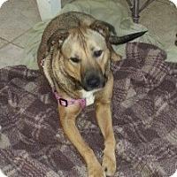 Adopt A Pet :: Maddie - Bardonia, NY
