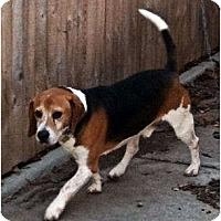 Adopt A Pet :: Monroe - Novi, MI