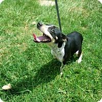 Adopt A Pet :: Chandler - Houston, TX