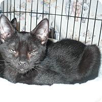 Adopt A Pet :: Miguel - Colmar, PA