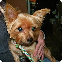 Adopt A Pet :: Scarlett - South Amboy, NJ