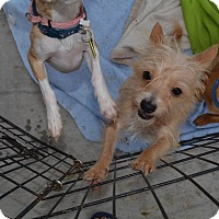 Adopt A Pet :: Barbie - Scottsdale, AZ