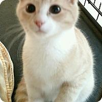 Adopt A Pet :: Lemon - Waldorf, MD
