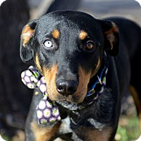 Adopt A Pet :: Harry - Corrales, NM