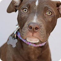 Adopt A Pet :: Ireland-Adopted! - Detroit, MI