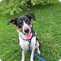 Adopt A Pet :: Tedo - Cedar Rapids, IA