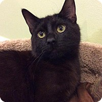 Adopt A Pet :: Bennie - Breinigsville, PA