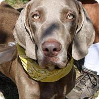 Adopt A Pet :: Wendy Weim - San Diego, CA