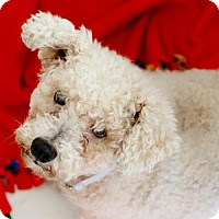 Adopt A Pet :: Mickey - Oakland Park, FL