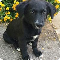 Adopt A Pet :: Coal - Phoenix, AZ