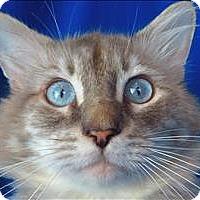 Adopt A Pet :: Larry - Sherwood, OR