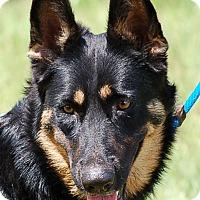 Adopt A Pet :: Melody AD 09-17-16 - Preston, CT